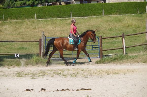 entraînement cheval